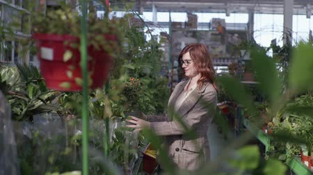 zahradník : attractive female shopper in glasses for vision, buyer chooses decorative flowers for design of home or office in orangery of a flower shop background of shelves with green plants