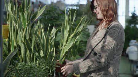 gözlem : adult girl in glasses for vision examines living green plants in pots for home or office decoration while standing in flower shop, background of green plantations Stok Video