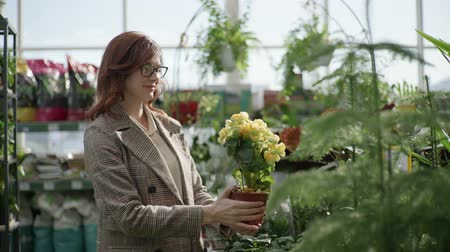 zahradník : portrait of a female florist in glasses for vision choosing decorative plants in pots for home or office design in a flower shop standing on a background of green plants, gardening Dostupné videozáznamy