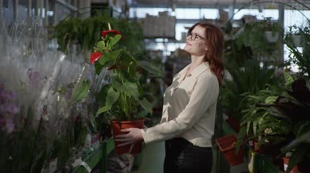 florista : portrait of cute young woman who is choosing flowering plant in department of houseplants, in supermarket to decorate interior of apartment in background of greenhouse with green plants