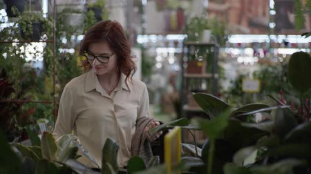 jardinero : cute young woman in a store chooses pot with a decorative blooming flower for home decor in department of indoor plants in supermarket Archivo de Video