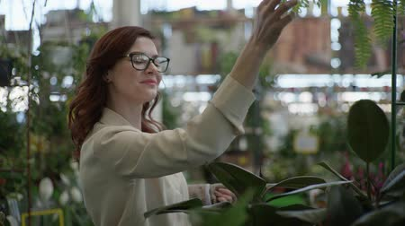 zahradník : cute smiling female customer in glasses for vision chooses decorative home plants in pots, in flower shop to decorate house or office background of green plants in greenhouse Dostupné videozáznamy
