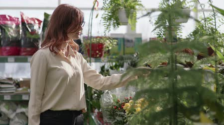 professional female florist examines home decorative potted flowers in a greenhouse of a flower shop on a background of shelves with green plants