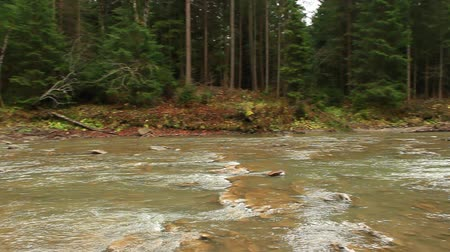 village life : landscape with mountainous river flowing in the Ukrainian village in the forest of Carpathian mountains Stock Footage