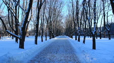 stroll : winter beautiful park with many big trees and path
