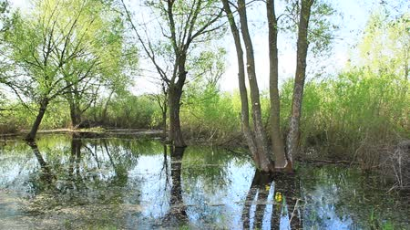 vízpart : Landscape with flooding in marshland in spring. Spring view. Water scenery. Flooding with pussy-willow and bushes Stock mozgókép