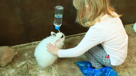 humanóide : Little girl stroking rabbit drinking water from drinker in zoo. Child taking care of pet. Rabbit drinking water Stock Footage