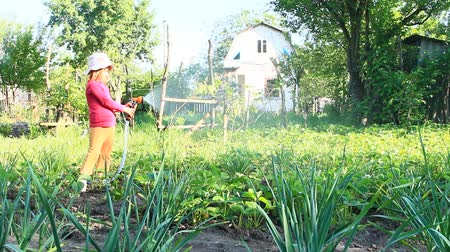 megváltás : Little girl is watering garden and bed. Orchard irrigation. Child watering beds on garden in hot summer day. Little girl watering plants outside