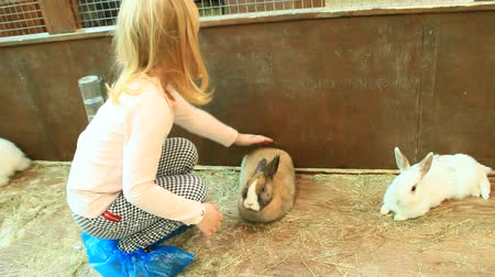Little girl stroking rabbit in zoo. Child taking care of pet Stok Video