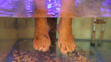 garra : Young woman receiving massage with small fishes. Peeling with fish. Girl enjoying medicinal procedure. Foot massage with fish in aquarium closeup. Fish spa procedure Stock Footage