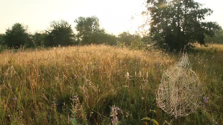 sepia : Summer landscape with grass and cobwebs in sun light at dawn. Summer field at dawn. Droplets of grass on grass at dawn. Summer field with green grass Stock Footage