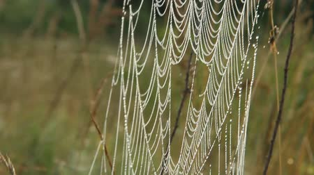 пробирка : Spiders web closeup with drops of dew at dawn. Wet grass before sun raise. Spider web with droplets of water. House of spider