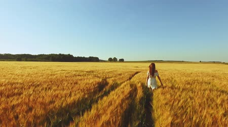 pszenica : Aerial footage: Woman in wheat field. Lifestyle and nature concept. Young woman running, walking, touching wheat and having fun in countryside. Harvest.