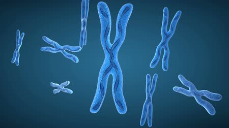 ДНК : Chromosome x and DNA Strands