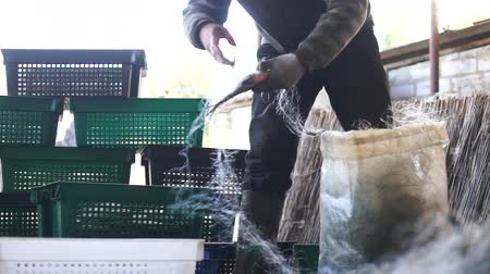 local : fisherman take the fish from the net