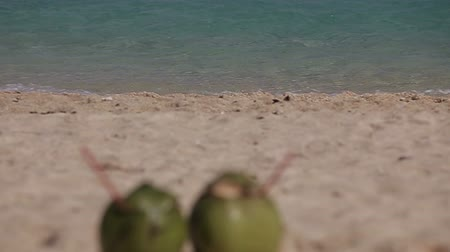 vista frontal : Green coconut on the tropical beach sand in front of the sea