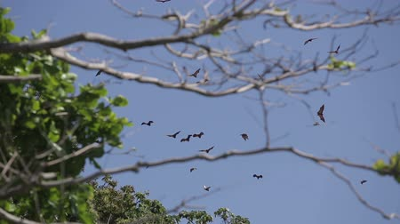 diurnal : Bats fly over the jungle and mountains