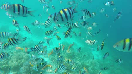 reef life : Coral reef and tropical Fish.