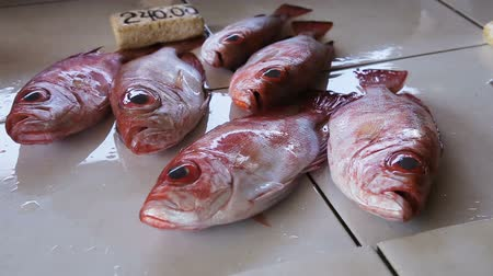 скумбрия : Fresh fish for sale at fish market.Asian market