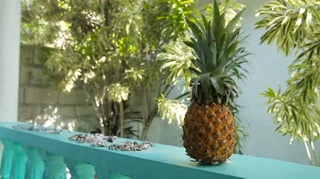 ananas : fresh pineapple outdoors under the terrace, near to lie shells