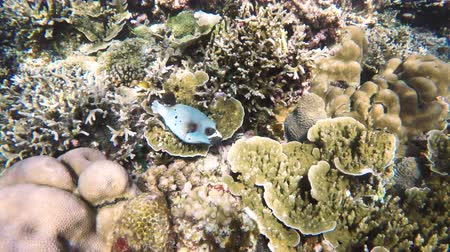 mergulhador : Many reef fish in the tropical sea on a coral reef.tropical underwater world.