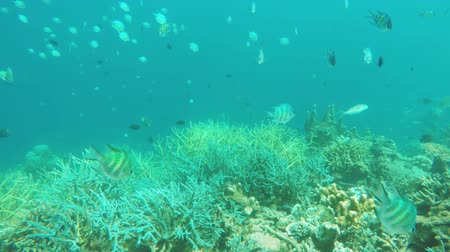 abyss : Many reef fish in the tropical sea on a coral reef.tropical underwater world.