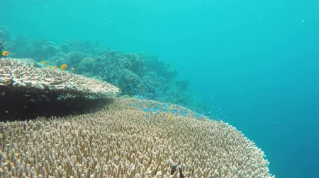 deep sea exploration : Many reef fish in the tropical sea on a coral reef.tropical underwater world.