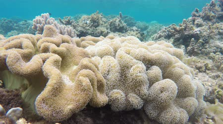 reefscape : Soft corals in the tropical sea.tropical underwater world.