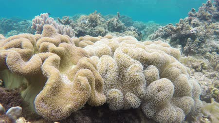 gine : Soft corals in the tropical sea.tropical underwater world.