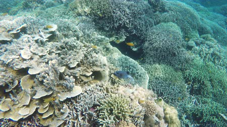 deep sea exploration : Many reef fish in the tropical sea on a coral reef. tropical underwater world.