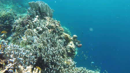 deep sea exploration : Many reef fish in the tropical sea on a coral reef.tropical underwater world