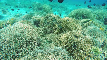 abyss : Many reef fish in the tropical sea on a coral reef.tropical underwater world