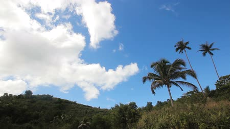 amazonka : Landscape with coconut trees and mountains in camiguin island. Wideo