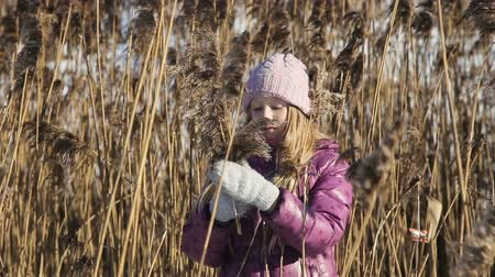 bird learning : young girl collects reeds on a winter day.The child in the reeds, cane.Portrait of the young girl at winter time reed. Stock Footage