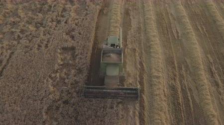 кукуруза : Combine harvester on a wheat field at harvest.