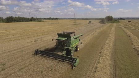 drone : Combine harvester on a wheat field at harvest.Aerial view of agricultural land with harvester. Stock Footage
