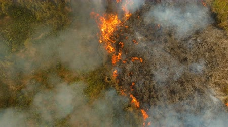 yangın : Aerial view forest fire on the slopes of hills and mountains. Forest and tropical jungle deforestation for human food farming and export. large flames from forest fire. Using fire to destroy natural habitat and causing large scale environmental damage in  Stok Video