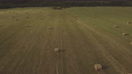 ranč : Haystacks straw left after harvesting wheat.Aerial view:round bales of straw in the meadow.Summer farm scenery with haystack.Yellow haystacks rolled into roll lie on the sloping field.Straw bales on field against sky.4K,UHD.