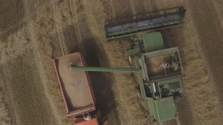 hay harvest : Aerial view combine harvester unloads grain in the truck harvesting wheat on agricultural land.Combine unloads grain in the truck after harvest.Aerial view of agricultural land with harvester.Aerial view of agricultural land with harvester.Agriculture Con