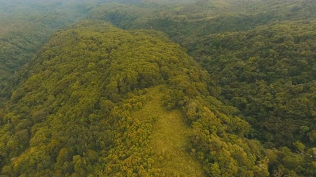 primeval : Sunset on tropical rainforest, mountains. Aerial view green jungle vegetation, trees and palms. Aerial footage of tropical forest trees. Flying drone landscape of nature with mountains, hills, rain forest. Rainforest view from above. Philippines, Camiguin