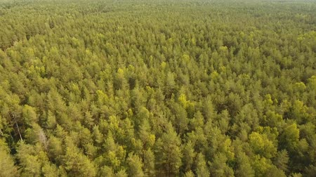 natural landscape : Aerial view Green forest, treetops, forest area. Pine, spruce forest from above. Aerial footage, 4K video