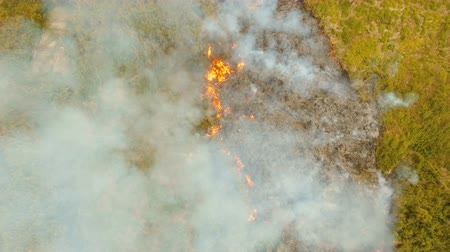 palawan : Aerial view forest fire on the slopes of hills and mountains. Forest and tropical jungle deforestation for human food farming and export. large flames from forest fire. Using fire to destroy natural habitat and causing large scale environmental damage in  Stock Footage