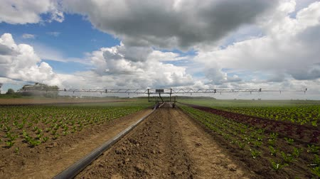 irrigation system : Aerial view: Crop Irrigation using the center pivot sprinkler system. An irrigation pivot watering salad, lettuce field. Irrigation system watering farm field, 4K.