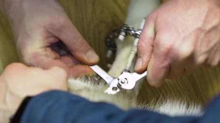 внешний : Veterinarian makes adjustments Dog with broken paw with External ring fixation technique in orthopedic medicine in veterinary clinic. Dog and Broken leg with metal fixator, External Fixation Ilizarov Apparatus.