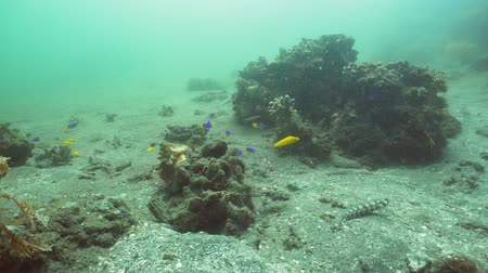 atol : Fish and coral reef. Wonderful and beautiful underwater world with corals and tropical fish. Hard and soft corals. Diving and snorkeling in the tropical sea. Travel concept. 4K video. Stok Video