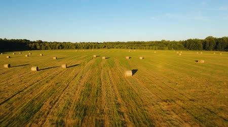 balé : Aerial view rolls Haystacks straw on the field, after harvesting wheat. Summer Farm Scenery with Haystacks. Rural landscape at sunset. drone footage, 4k
