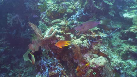 atol : Fish and coral reef. Dive, underwater world, corals and tropical fish. Bali,Indonesia. Diving and snorkeling in the tropical sea. Wonderful and beautiful underwater world with corals and tropical fish.