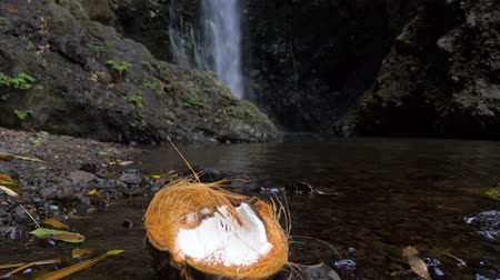 шелуха : Half of the coconut in the jungle, on the coast of the river against the background of a waterfall. Стоковые видеозаписи