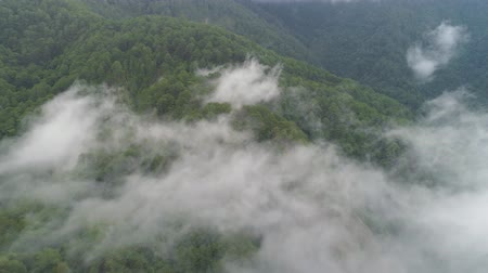 luzon : Aerial view of mountains covered forest, trees in clouds and fog. Cordillera region. Luzon, Philippines. Slopes of mountains with evergreen vegetation. Mountainous tropical landscape. Stock Footage