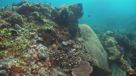 atol : Fish and coral reef at diving. Wonderful and beautiful underwater world with corals and tropical fish. Hard and soft corals. Philippines, Mindoro. Diving and snorkeling in the tropical sea.